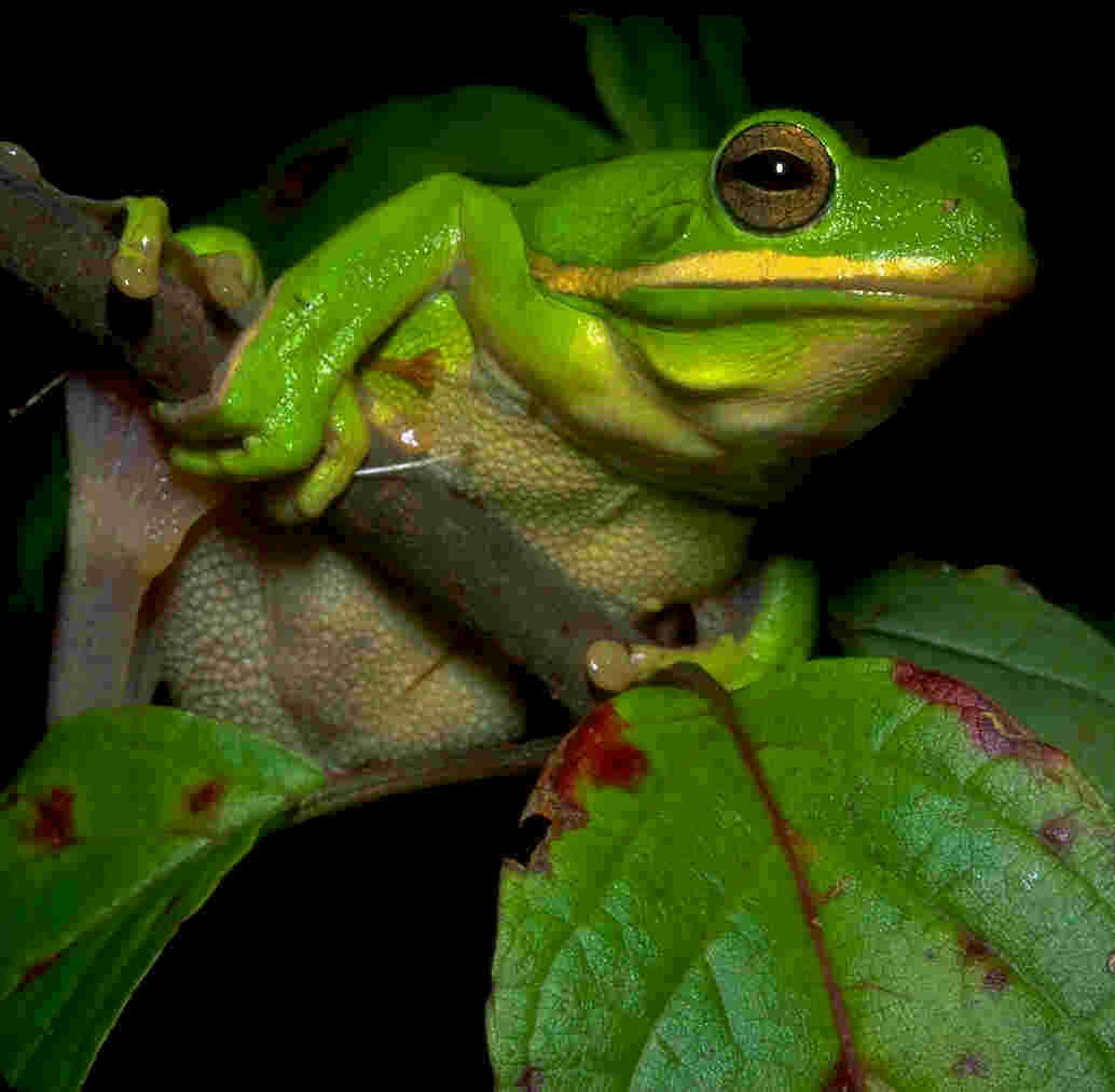 nature programs, environmental education, Tennessee frogs and toads information.